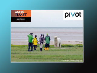 Angry Planet: Polar Bear on Pivot TV